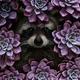 Аватар пользователя Potihone4ky