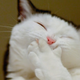 Аватар пользователя ilovechausies