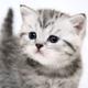 Аватар пользователя Kotenok1