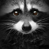 Аватар пользователя Pure2