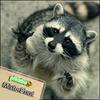 Аватар пользователя MisterEnot