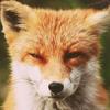 Аватар пользователя CourageFox