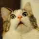 Аватар пользователя Mentor