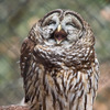 Аватар пользователя OWWL