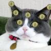 Аватар пользователя sqwirell