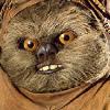 Аватар пользователя gekap