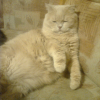 Аватар пользователя poloten4iko