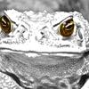 Аватар пользователя Ofrog
