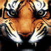 Аватар пользователя TigerPolosatik