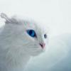 Аватар пользователя BoM41cK