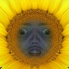 Аватар пользователя DosyaTehTurtle