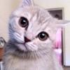 Аватар пользователя Mrmycat