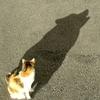 Аватар пользователя Imen