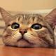 Аватар пользователя Molehill