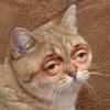 Аватар пользователя Gerzog