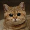 Аватар пользователя CatPatrick