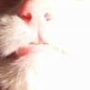 Аватар пользователя Astarta