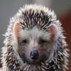 Аватар пользователя Hedgehog