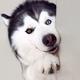 Аватар пользователя Nedobitaya