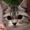 Аватар пользователя aodan1989