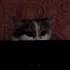 Аватар пользователя Kuzko