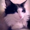 Аватар пользователя alena237