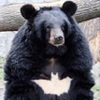 Аватар пользователя BatBear