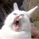 Аватар пользователя WofT