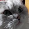 Аватар пользователя keien