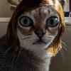 Аватар пользователя Enphliette