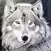 Аватар пользователя Wo1f