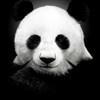 Аватар пользователя Creddy