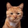 Аватар пользователя DEagle7727
