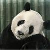 Аватар пользователя 6ap6apuk