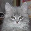 Аватар пользователя oHsobaKa