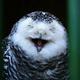 Аватар пользователя Soulstrom