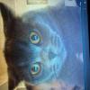 Аватар пользователя Koordinator01