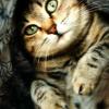 Аватар пользователя Femme