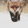 Аватар пользователя foxess