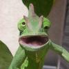 Аватар пользователя kandiru