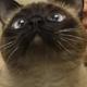 Аватар пользователя toncks