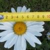 Аватар пользователя navi1818