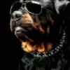 Аватар пользователя ToTTenKopF