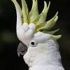 Аватар пользователя kakaduuuuu
