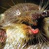 Аватар пользователя Opossumka