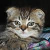 Аватар пользователя Tiamat86
