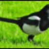 Аватар пользователя kimnick