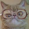 Аватар пользователя drabadangolet