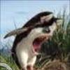 Аватар пользователя Saffko