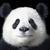 Аватар пользователя waxzombie
